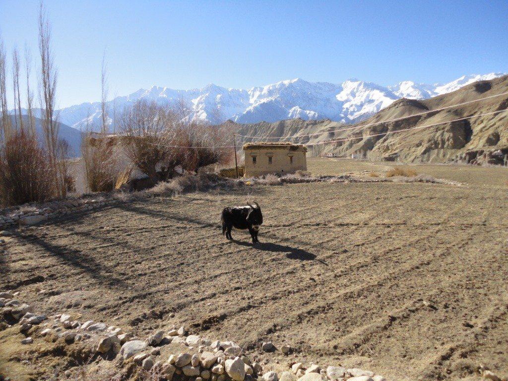 Beauty of nothingness, Ladakh Trip