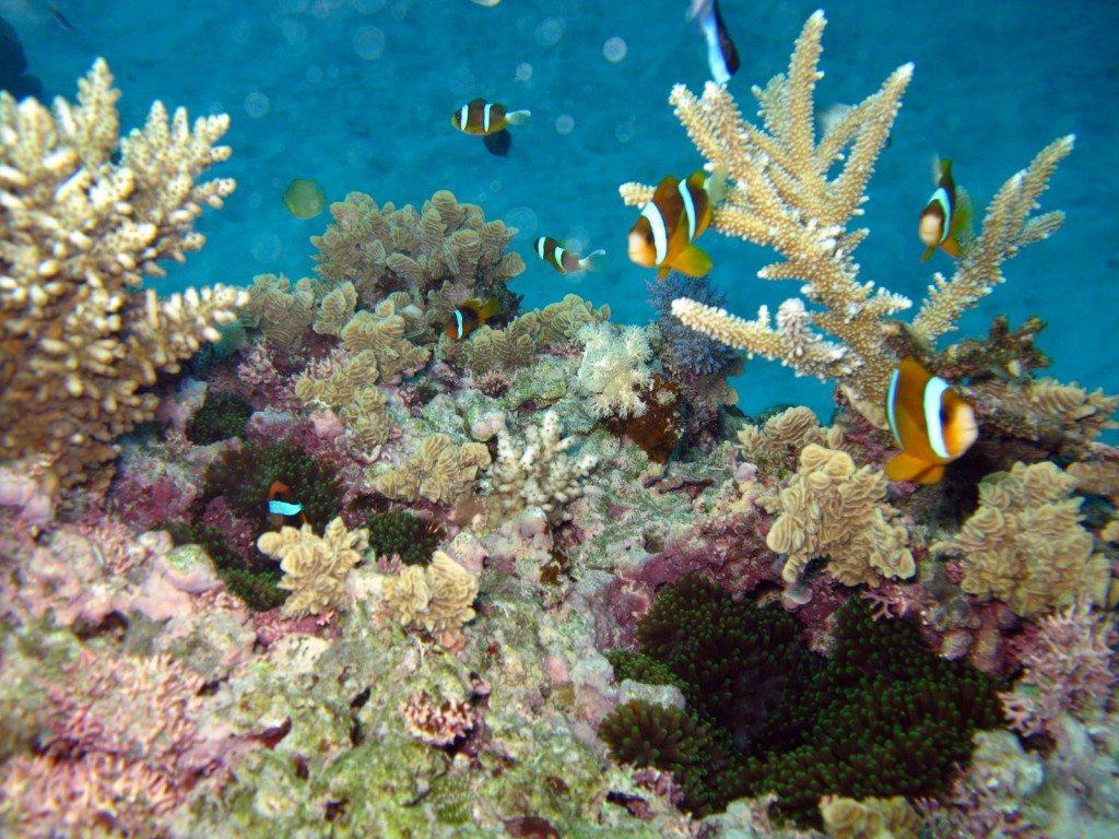 Great Barrier Reaf Diving & Snorkeling, Australia