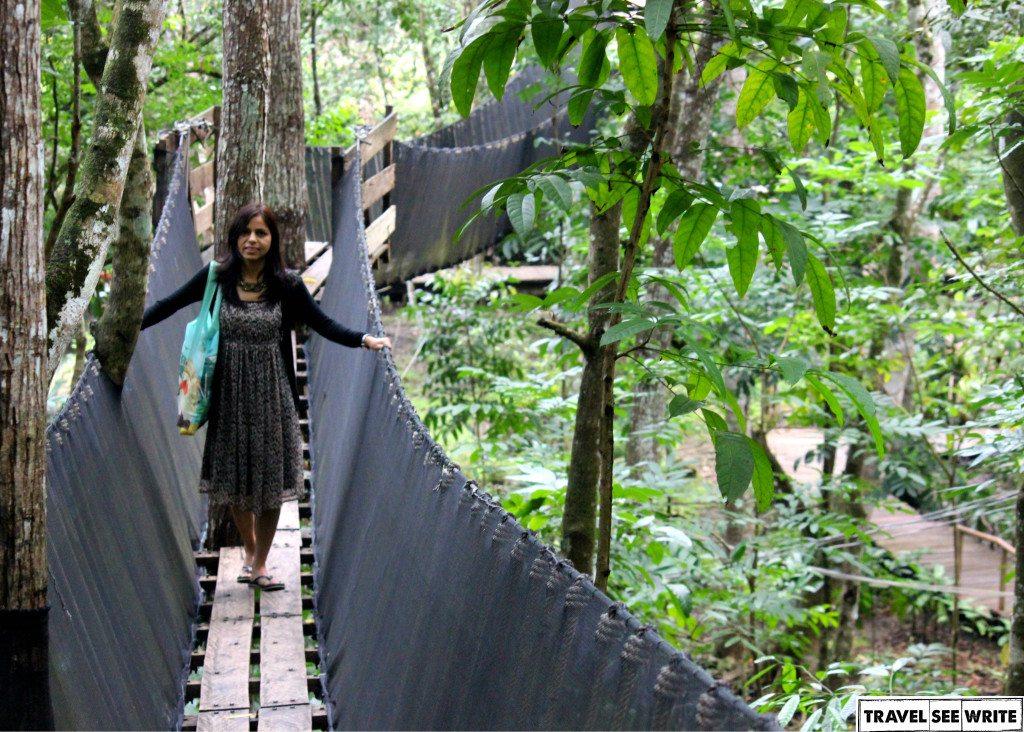 Hanging Bridge at Chocolate Hill Adventure Park, Bohol