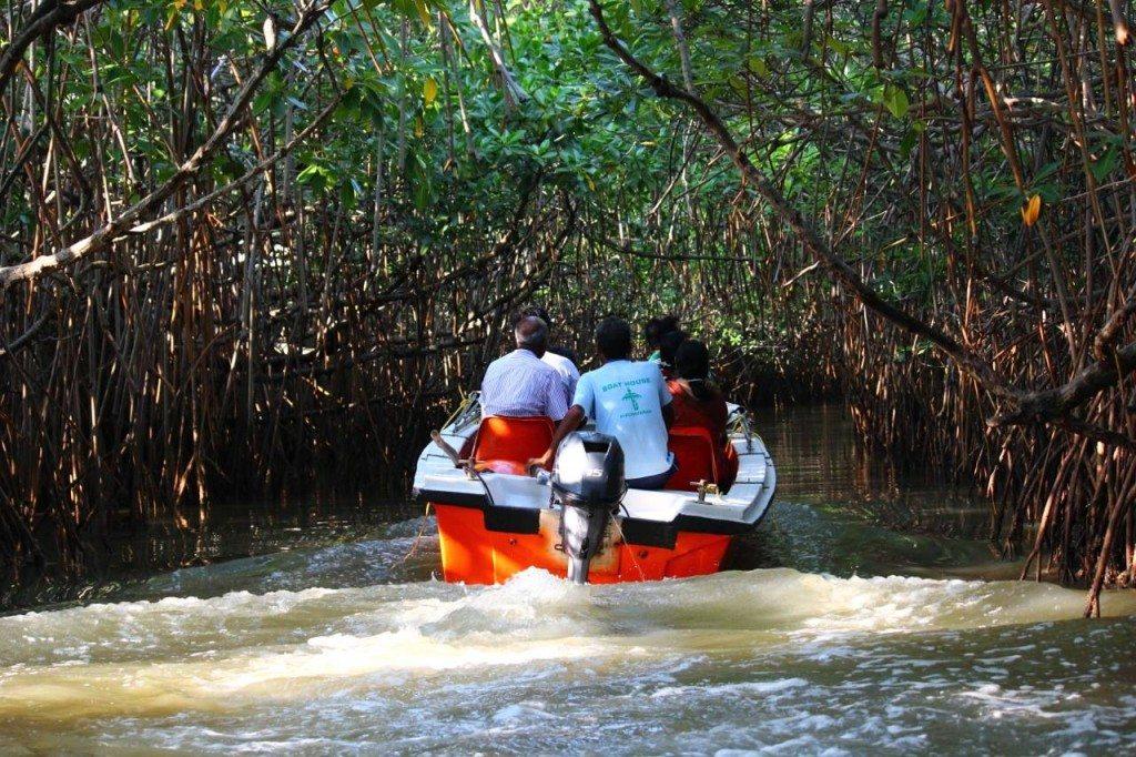 Pichavaram Mangrove Forest Caves