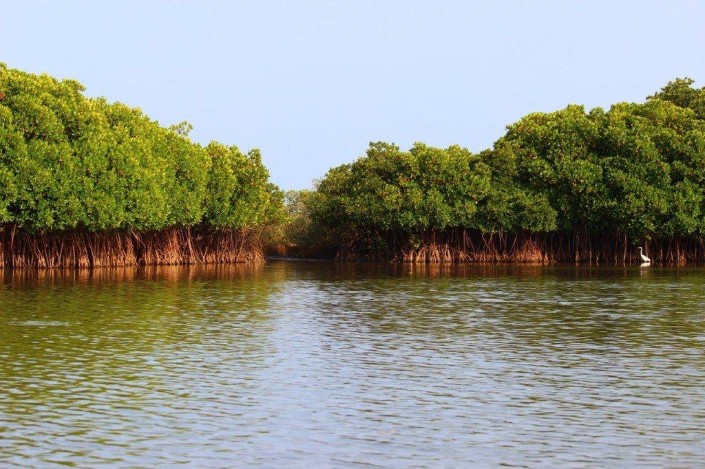 Pichavaram Mangrove Forests