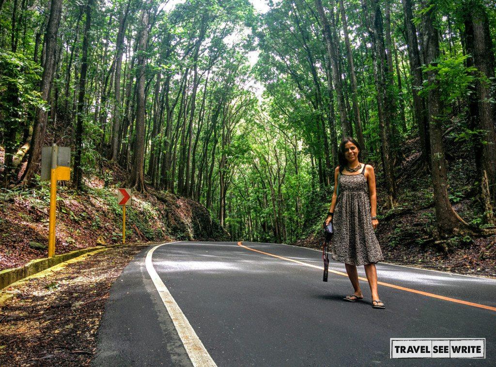 The Billar-Loboc Man-made Forest
