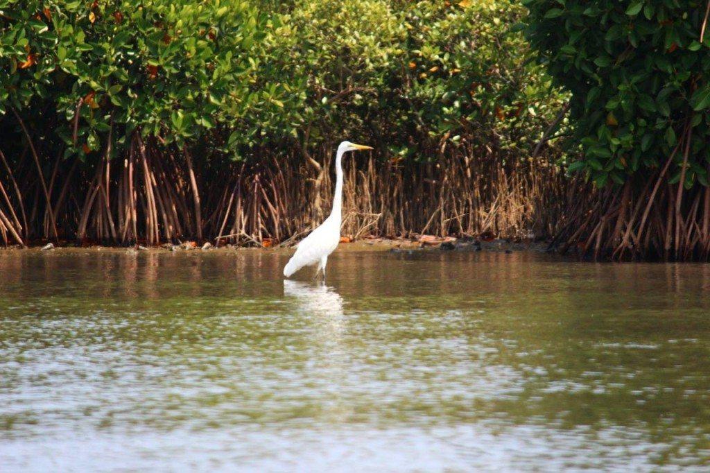 Offbeat Goa: TGo bird watching at Salim Ali Bird Century