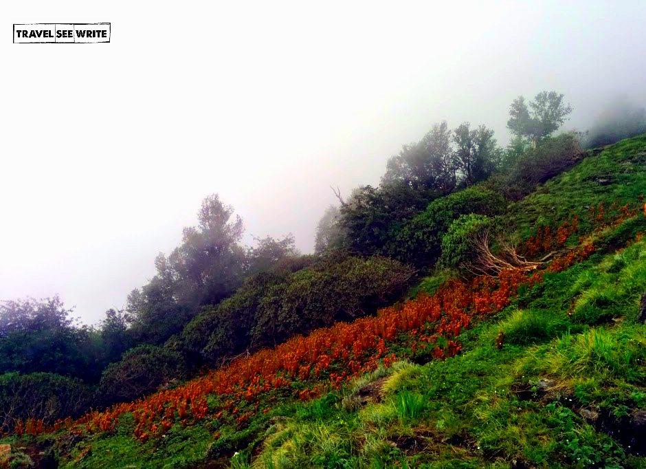 Wild herbs, Bashal Peak, Sarahan