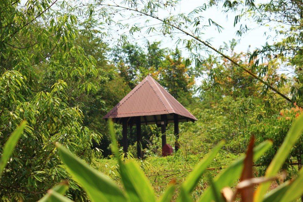 Amidst the Greens of Pulau Ubin - 1