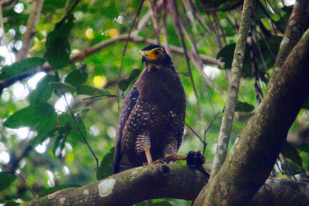 Pulau Ubin Fauna