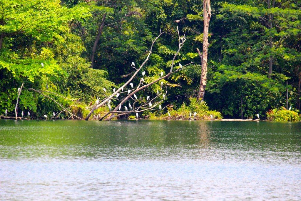 The birds at Pulau Ubin - 1