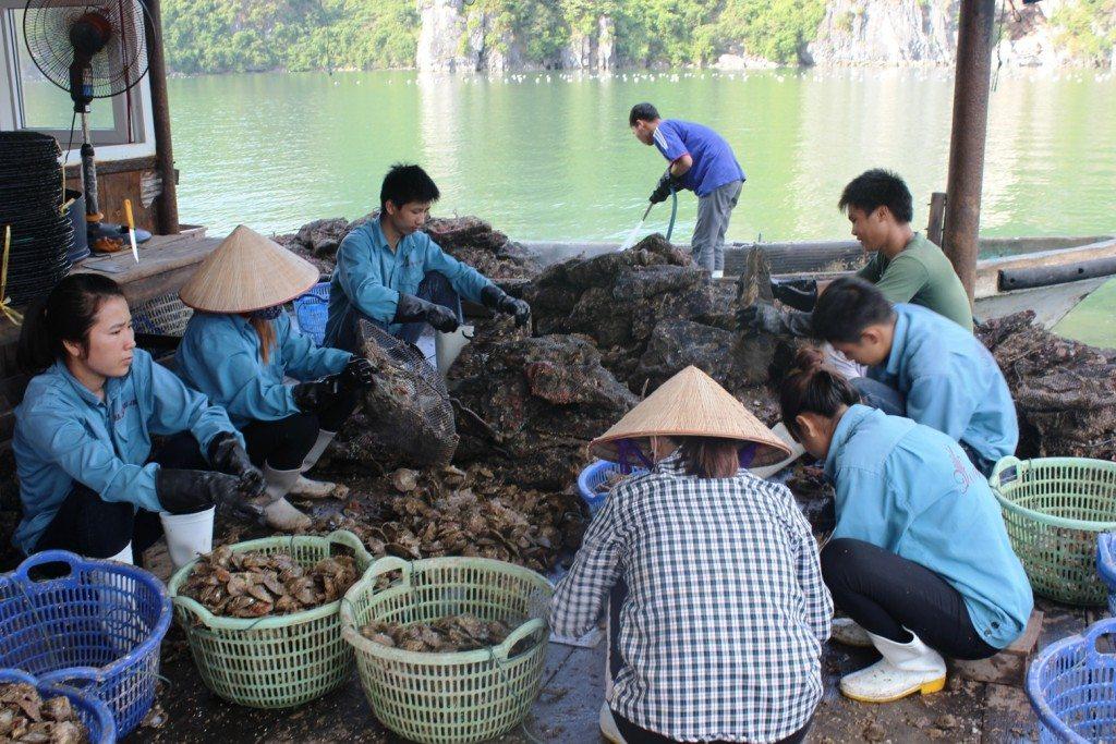 Visit Vietnam to see Pearl Farming at Halong Bay