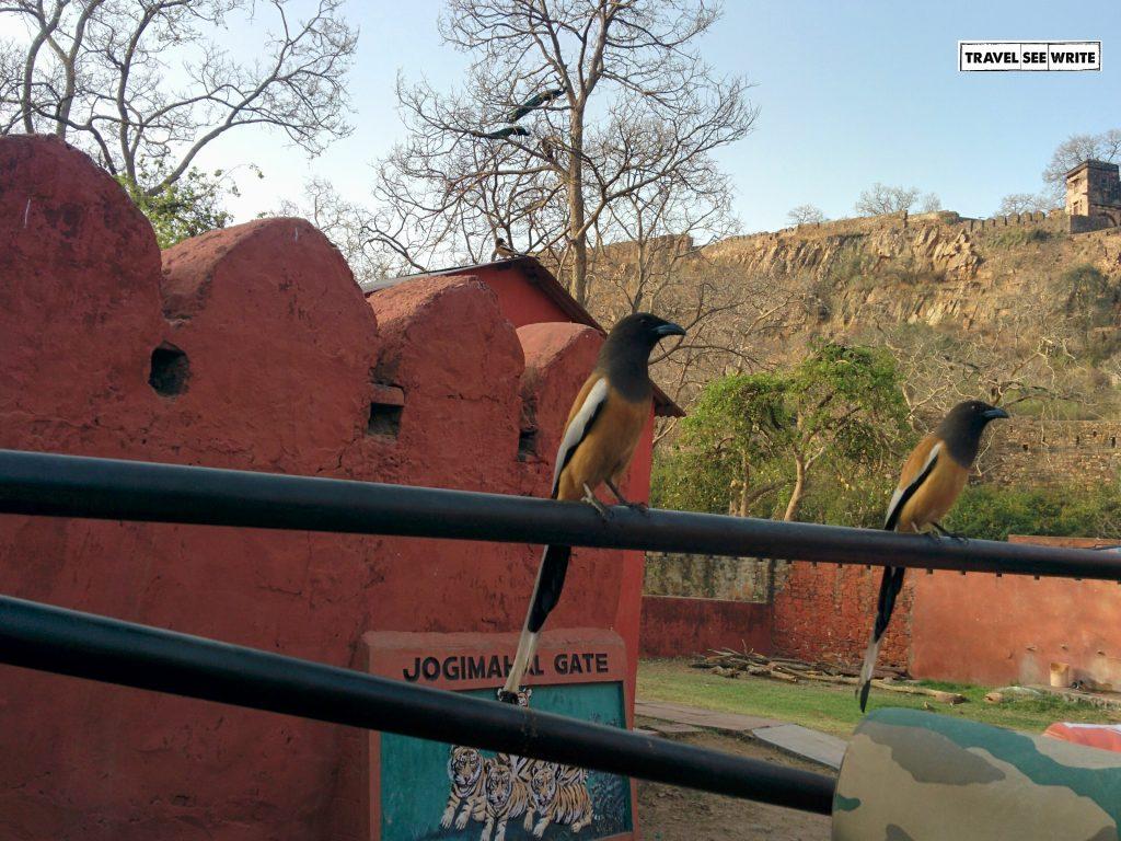 Jogi Mahal Gate, Ranthambore National Park