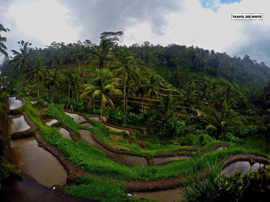 The beautiful Rice Terraces of Tegalalang, Bali