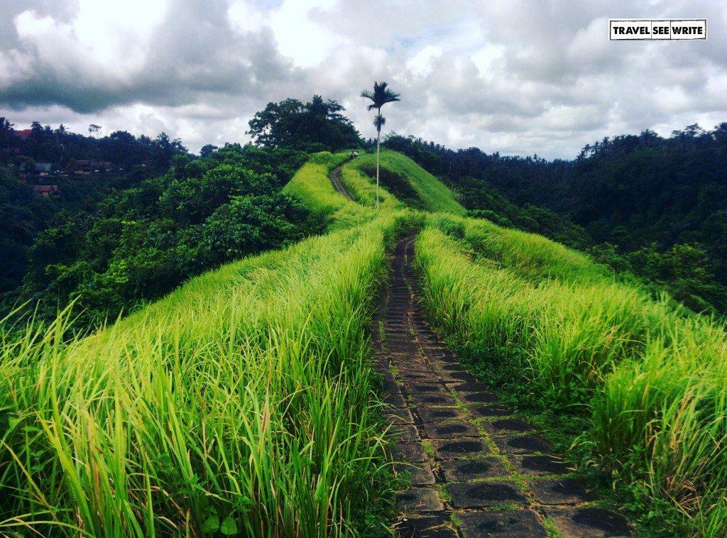 View from the Campuhan Ridge Walk Trek, Ubud, Bali