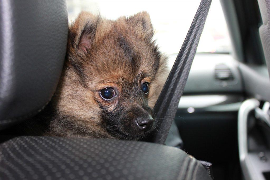Solo Travel Road trip tips: Wear seat belts