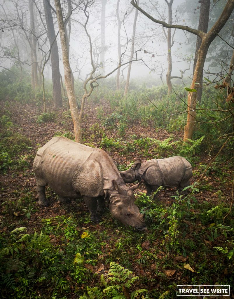Single horned Rhinos, Chitwan National Parks, Nepal
