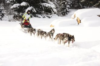 Winter in Slovakia - Go dog sledding in High Tatras
