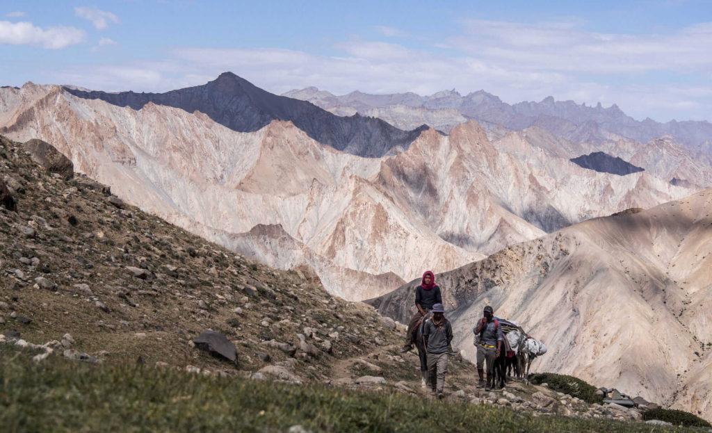 Markha valley horses, Ladakh