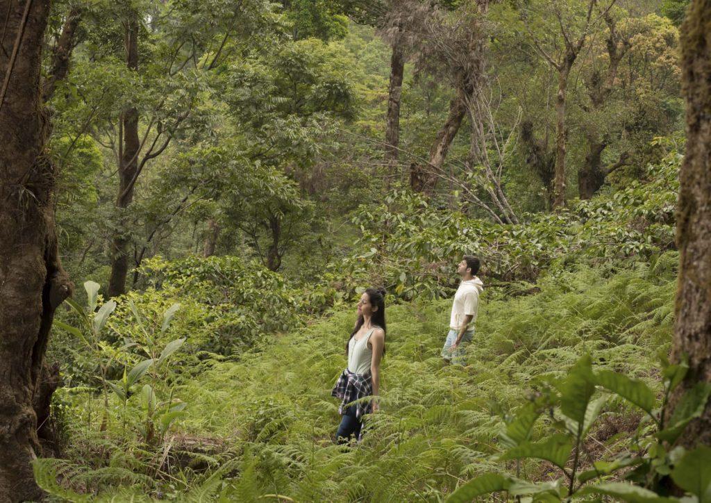 Forest-Therapy at Tamara, Coorg, Karnataka