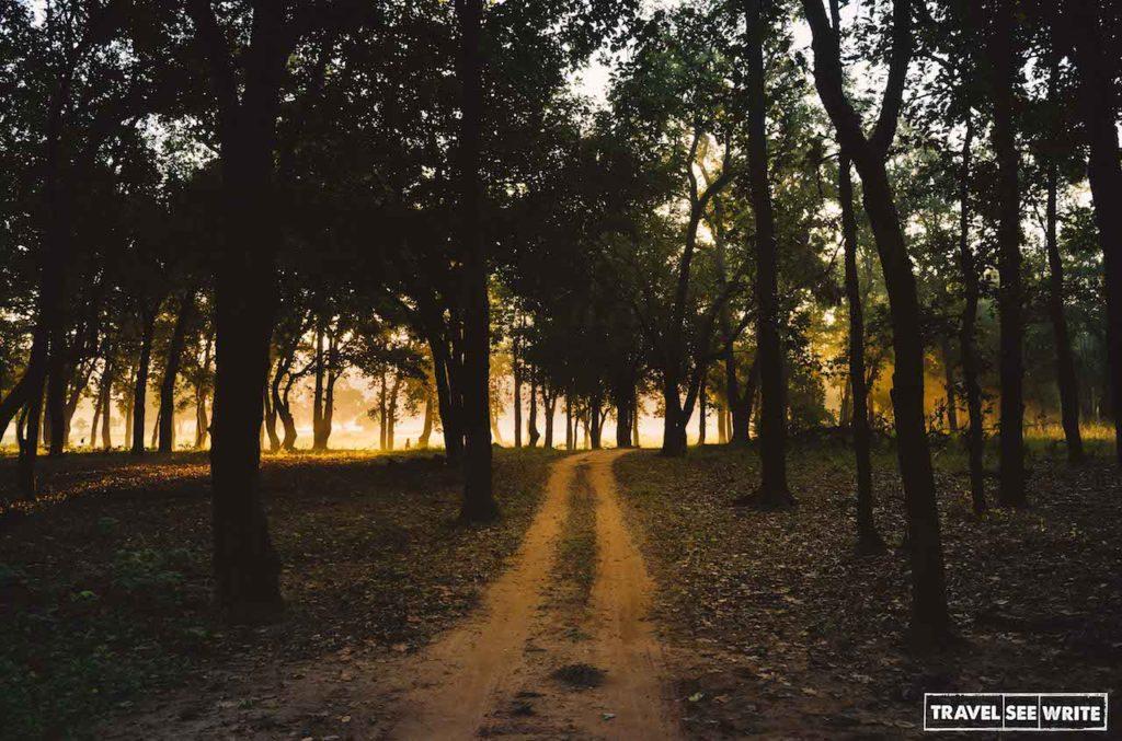 The golden hour at Bandhavgarh National Park