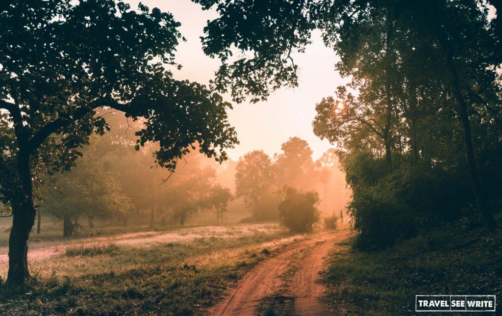 Morning golden hour experienced during Bandhavgarh National Park Safari