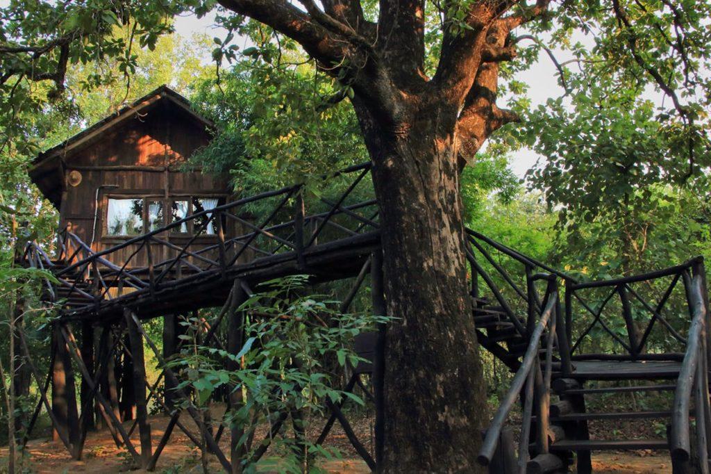 The sprawling Treehouse built on a Mahua Tree, Treehouse Hideaway, Bandhavgarh, MP