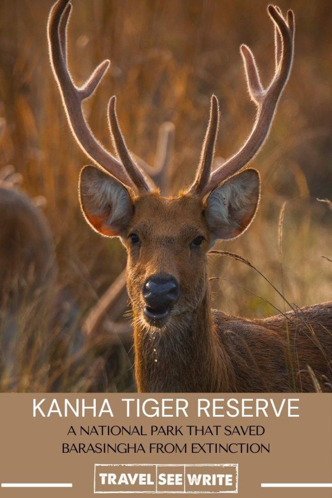 Kanha Tiger Reserve saved Barasingha from extinction